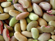 Raw beans close-up. Natural plant Stock Photography