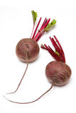 Raw beetroot bulbs. Two bulbs of raw beetroot isolated on white background Stock Photos