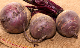 Raw beetroot. A close up of fresh uncooked beetroot Royalty Free Stock Photos