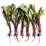 Raw Beetroot Isolated Stock Photos
