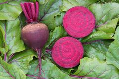 Raw beetroot sliced on leaves. Top view , copy space. Raw beetroot sliced on leaves. Top view with copy space Royalty Free Stock Photo