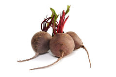 Raw beets. Bunch of raw beets  on white background Royalty Free Stock Photos