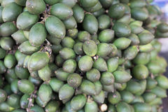 Raw betel nut  in  market. Raw betel nut  in the agricultural market Royalty Free Stock Image