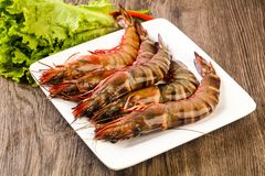 Raw big tiger prawn. Ready for cooking Royalty Free Stock Image