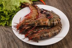 Raw big tiger prawn. Ready for cooking Royalty Free Stock Photos