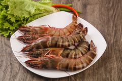 Raw big tiger prawn. Ready for cooking Royalty Free Stock Photography