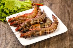Raw big tiger prawn. Ready for cooking Royalty Free Stock Images