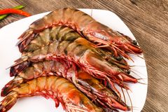 Raw big tiger prawn. Ready for cooking Stock Photography