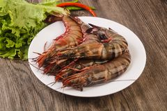 Raw big tiger prawn. Ready for cooking Royalty Free Stock Photo