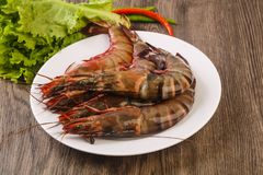 Raw big tiger prawn. Ready for cooking Stock Photo