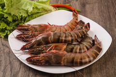 Raw big tiger prawn. Ready for cooking Stock Photos