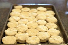 Raw biscuits on pan ready to be cooked stock photos