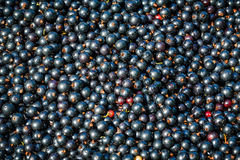Raw black currant Royalty Free Stock Photos