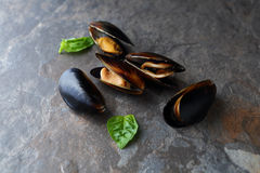 Raw black mussels Royalty Free Stock Photos