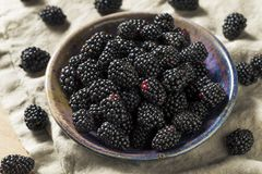 Raw Black Organic Blackberries. In a Bowl Stock Photography