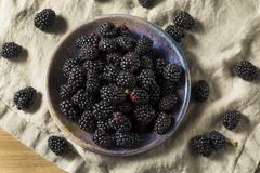 Raw Black Organic Blackberries. In a Bowl Stock Image