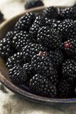 Raw Black Organic Blackberries. In a Bowl Royalty Free Stock Images