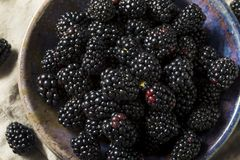 Raw Black Organic Blackberries. In a Bowl Royalty Free Stock Photos
