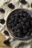 Raw Black Organic Blackberries. In a Bowl Royalty Free Stock Photo