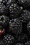 Raw Black Organic Blackberries. In a Bowl Stock Photo