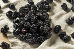 Raw Black Organic Blackberries. In a Bowl Stock Images