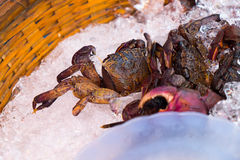Raw black salty crabs in local Thailand Stock Images