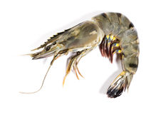Raw black tiger shrimp Stock Photography