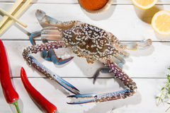 Raw blue crab. Above view raw blue crab and ingredients ready to cook, on bright wooden background Royalty Free Stock Photography
