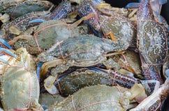 Raw blue crab Royalty Free Stock Photos