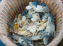 Raw blue crab Stock Photos