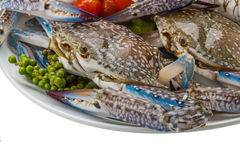 Raw blue crab. Ready to cook Stock Images