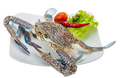Raw blue crab. Ready to cook isolated on white background Stock Images