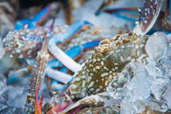 Raw blue crabs on ice Royalty Free Stock Photos