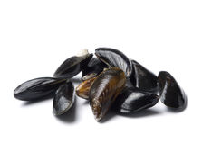Raw blue mussels isolated Royalty Free Stock Photos