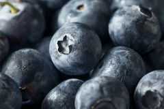 Raw Blue Organic Blueberries. In a Basket Royalty Free Stock Photos