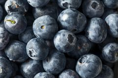 Raw Blue Organic Blueberries. In a Basket Royalty Free Stock Images