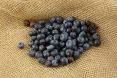 Raw blueberries. Fresh fruit harvest of raw blueberries on burlap Royalty Free Stock Image