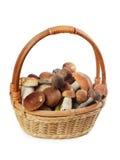 The raw boletus edulis in basket Stock Photos