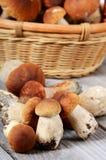 The raw boletus edulis in basket Stock Image