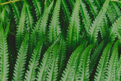 raw bracken greenery forest pattern background Royalty Free Stock Photography