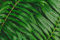 Raw bracken greenery forest pattern background. And wallpaper Stock Photography