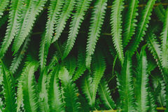 Raw bracken greenery forest pattern background. And wallpaper royalty free stock photography