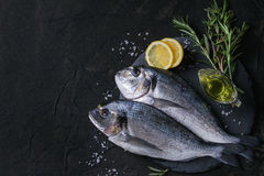 Raw bream fish with herbs Stock Images