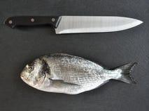 Raw bream fish Stock Photography