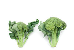 Raw broccoli Stock Images