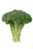 Raw Broccoli Florets. Stalk of raw broccoli, isolated on a white background Royalty Free Stock Photography