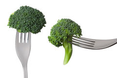 Raw broccoli on forks isolated against white background Stock Photos