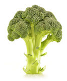 Raw broccoli isolated on white. Background Stock Photography