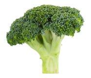 Raw broccoli isolated on white background. Broccoli isolated on white background Royalty Free Stock Photo