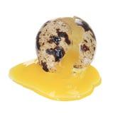 Raw broken quail egg Royalty Free Stock Images